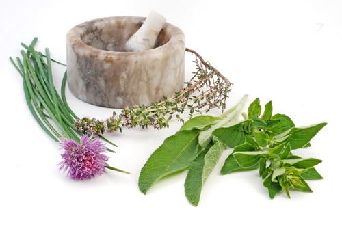 Oregano (Origanum vulgare) calmeaza durerile reumatice si intestinale