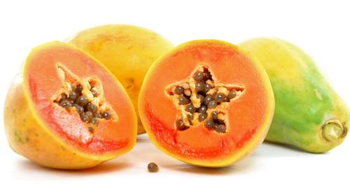 Carica papaya