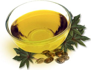 36-06-Ricinul, uleiul de ricin, Ricinus communis